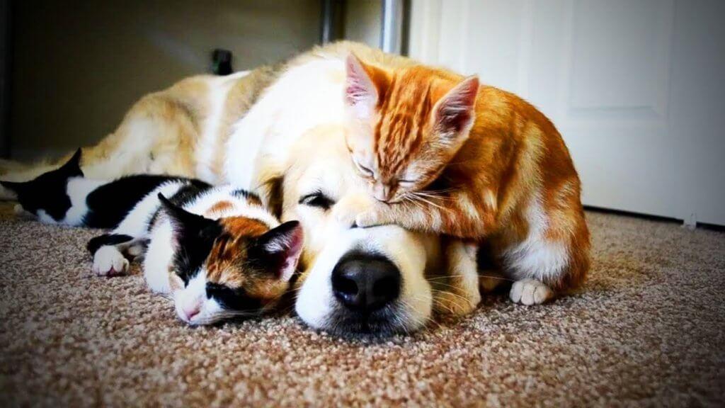 vaccinazioni cane e gatto
