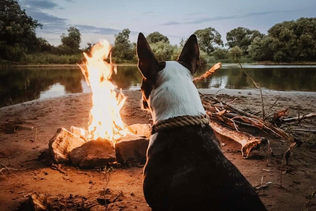 veleni tossici per inalazione nocivi per i cani