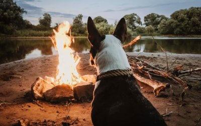 L'inalazione di sostanze tossiche nei cani