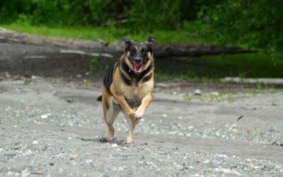 Zampe gonfie nei cani: cause e rimedi
