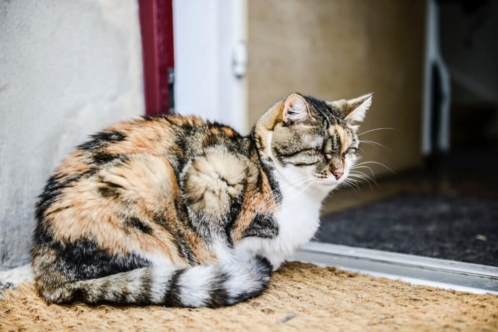 Problemi di salute comuni nei gatti anziani