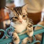 avvelenamento dei gatti per ingestione di sostanze tossiche