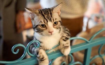 L'ingestione di sostanze tossiche nei gatti