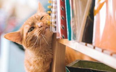 Dermatite da contatto e ustioni chimiche nel gatto