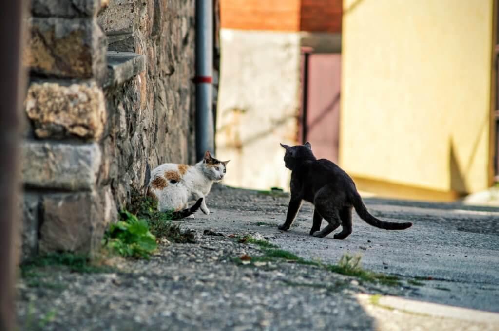 morsi, combattimenti tra gatti e antibiotici