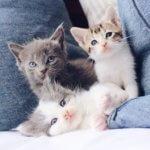 Emergenze comuni nei gattini cuccioli