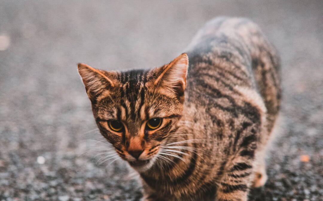Avvelenamento nei gatti: una panoramica generale