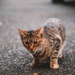 Avvelenamento nei gatti e sostanze tossiche