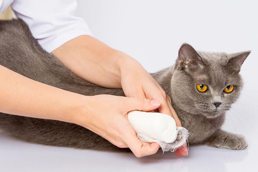 come medicare un animale ferito