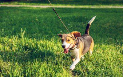 4 Rimedi casalinghi per L'IVU (infezione delle vie urinarie) del tuo cane