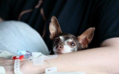 Come gli animali possono migliorarti la salute