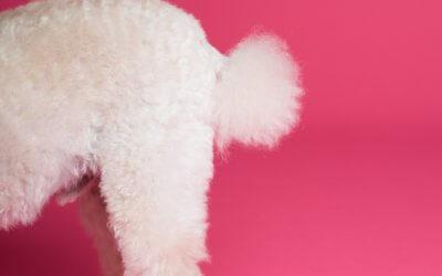 Malattia della ghiandola anale nei cani