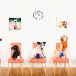 Benefit marketing veterinario