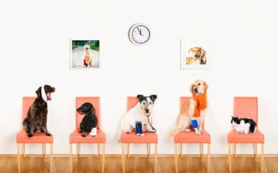 Benefit della pubblicità medico veterinaria