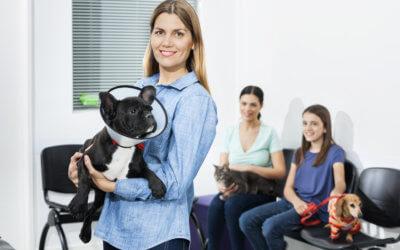 Pubblicità veterinaria – Trucchi & Consigli