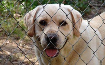 Adottare un animale domestico: 10 vantaggi