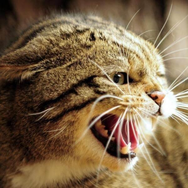 gatto impaurito - come tranquillizzarlo