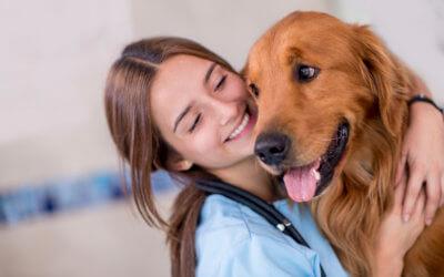 Marketing per ambulatori e cliniche veterinarie