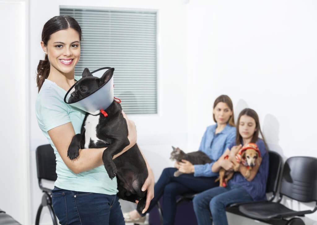 pubblicita online per veterinari