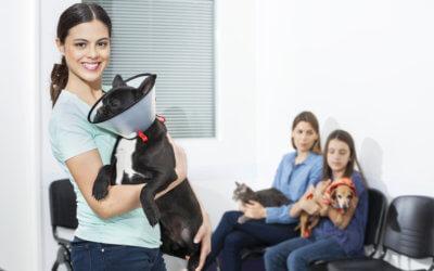 Web marketing per veterinari
