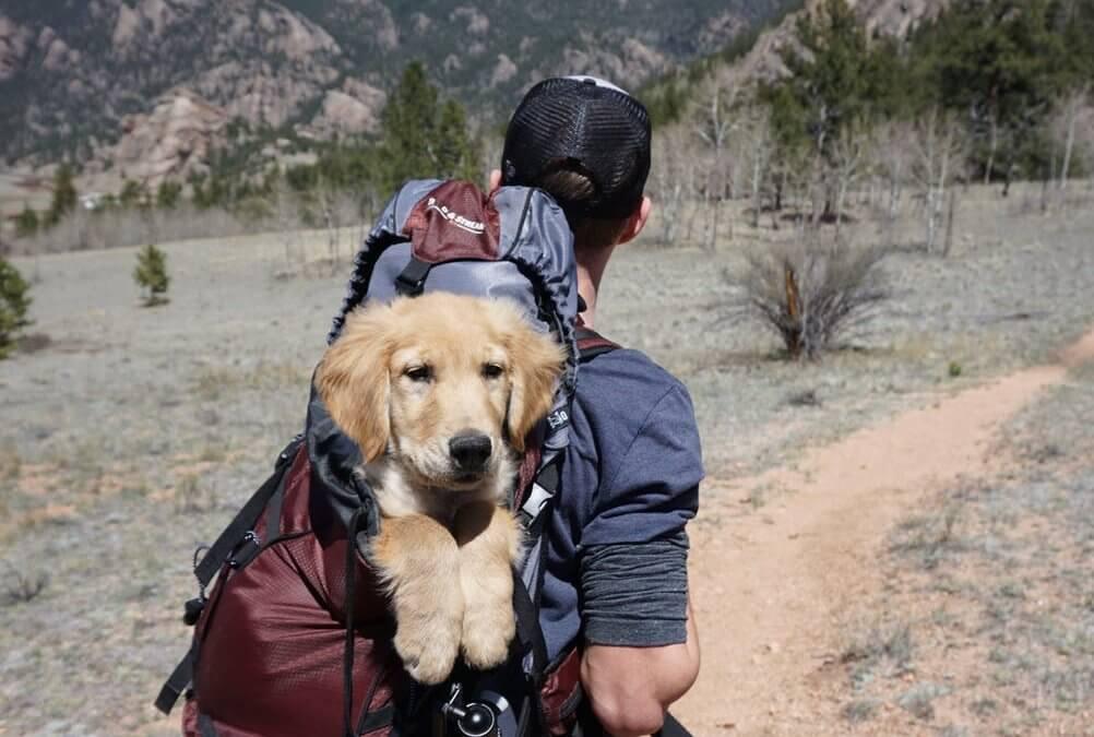 Consigli per viaggiare con il tuo cane