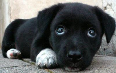 Batteri, parassiti e virus dei cani