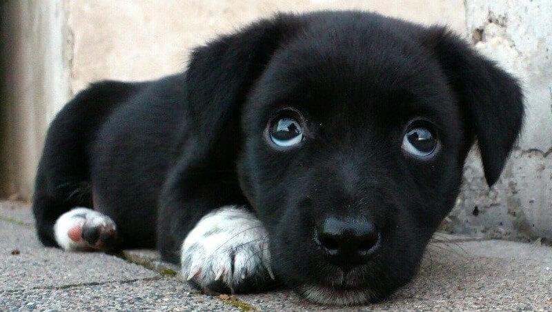 Batteri, parassiti, virus dei cani