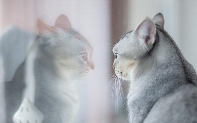 Come rimanere in salute avendo gatti domestici