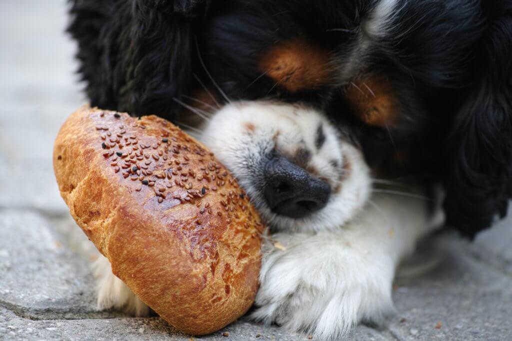 cane e pane