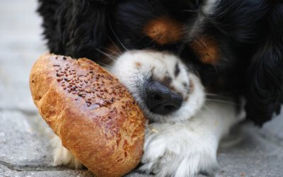 Perché il mio cane non mangia?