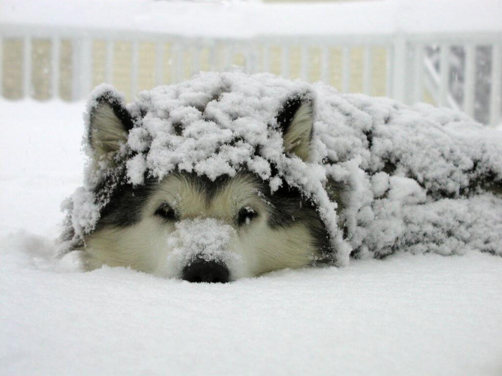 cane ipotermia cause, cura e prevenzione