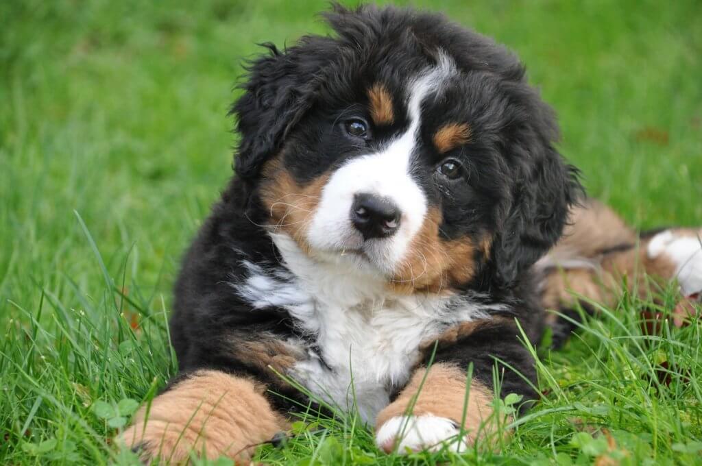 cane nuovo come educarlo