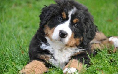 Far socializzare il tuo nuovo animale domestico