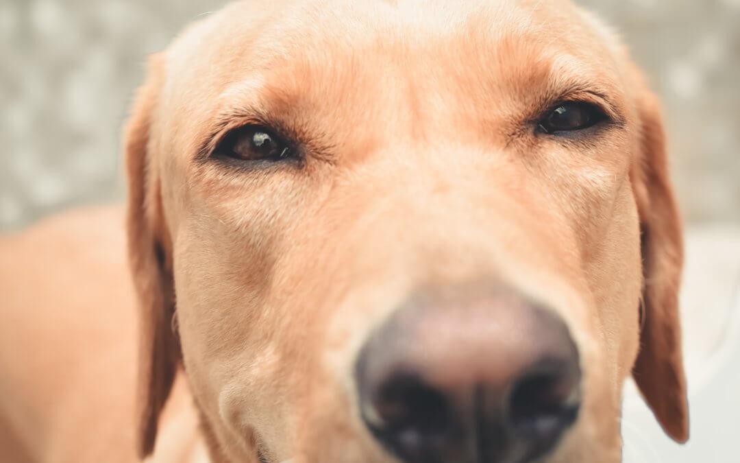 Perchè il mio cane starnutisce?