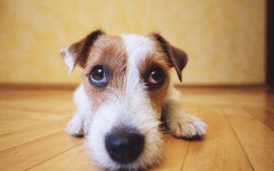Insufficienza renale cronica nei cani