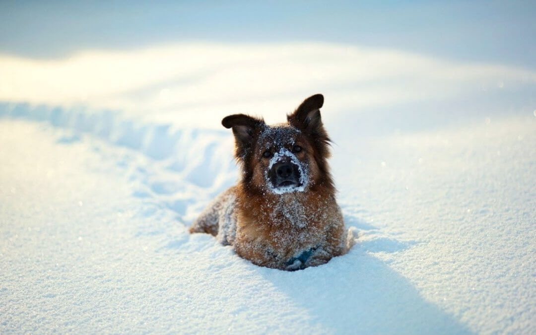 Ipotermia nei cani, cosa devi sapere