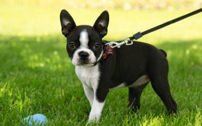 Cosa sono le ghiandole perianali del cane e come prendersene cura