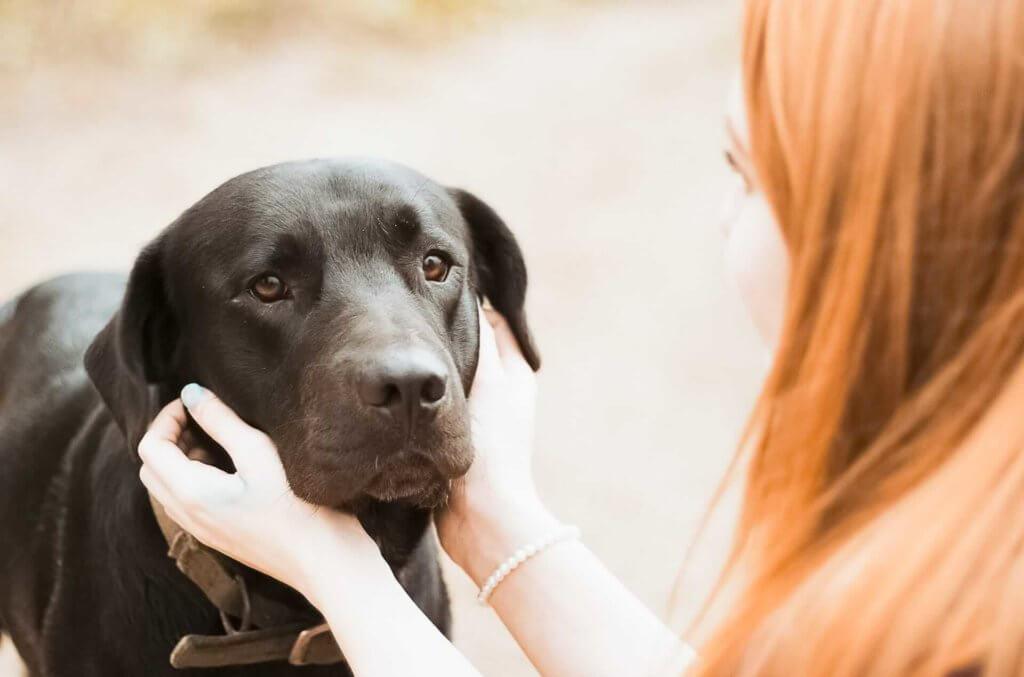 shock ipovolemico cane