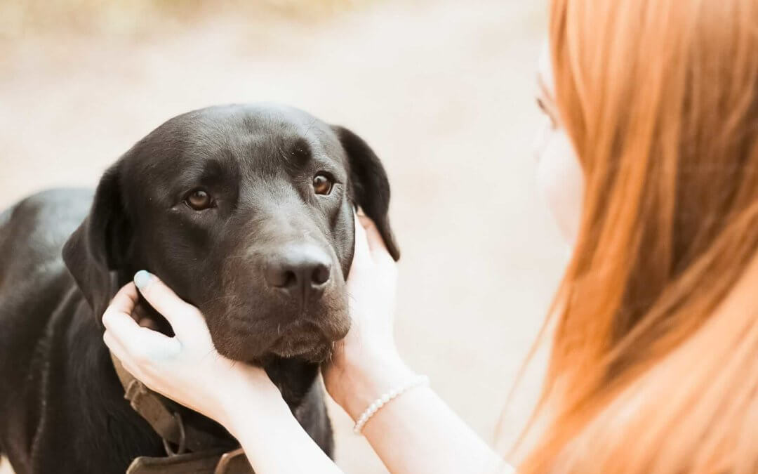 Shock ipovolemico nei cani