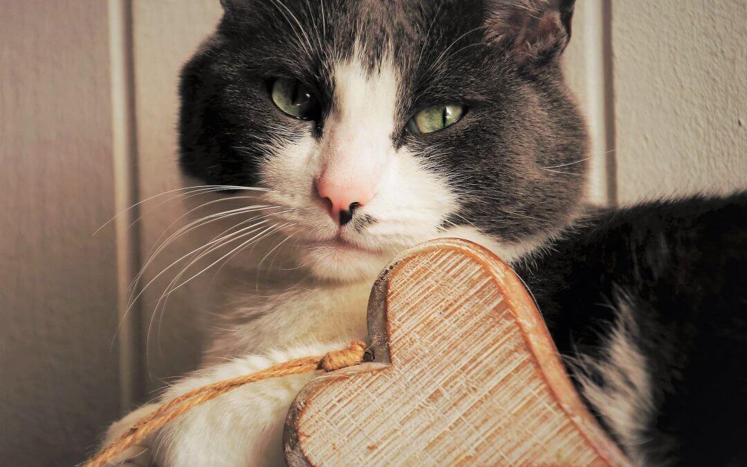 Come mantenere in salute i gatti domestici
