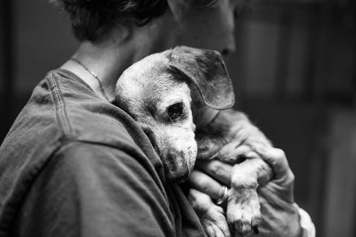 cane anziano vicino alla morte