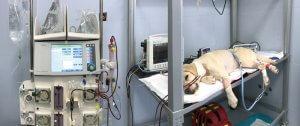 clinica veterinariaassistenza