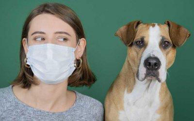 Coronavirus, nessun problema per Cane e Gatto